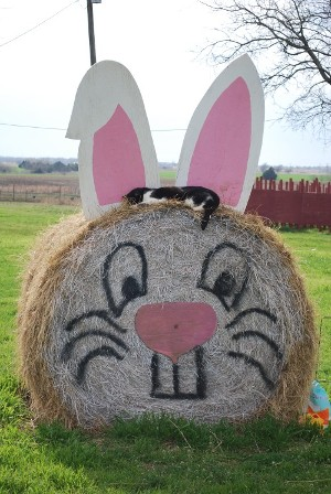 Rabbit Haybale